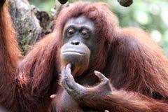 有趣的动物模仿 免版税库存图片