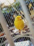 有趣的小鸟 免版税库存照片