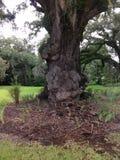 有趣的树干 免版税图库摄影