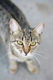 有趣的猫 免版税图库摄影