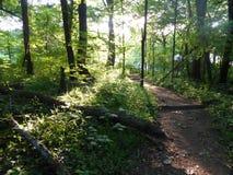 有足迹和下落的树的晴朗的森林 库存照片