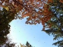 有跌倒的秋叶的机盖 免版税图库摄影