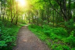 有路和太阳光的绿色森林 库存图片
