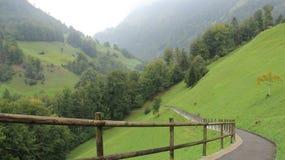 有路和绿色森林的牧场地 库存照片