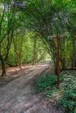 有路标和可爱的起斑纹的照明设备的森林道路 库存图片