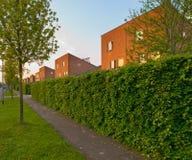 有路面和树篱的都市街道 库存照片