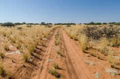 有轮胎的桑迪红色土路通过与干燥黄色草和灌木,纳米比亚,非洲的干旱的风景跟踪带领 免版税库存照片