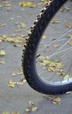 有轮胎的自行车车轮 免版税库存图片