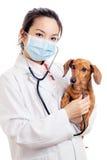 有达克斯猎犬狗的亚裔妇女兽医 免版税图库摄影