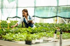 有运转自温室的片剂的年轻人相当亚裔妇女农艺师检查植物 免版税库存照片