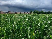 有进来的风暴的玉米田 图库摄影
