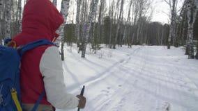 有远足生活方式冒险概念的背包的妇女 步行在一个冬天森林的女孩用棍子 股票录像