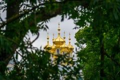 有迷离树的一个金黄教会在前景在圣彼德堡,俄罗斯 库存图片