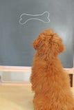 有选件类的狗 免版税图库摄影