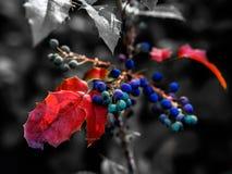 有选择性的颜色特写镜头被射击五颜六色的莓果 免版税库存图片