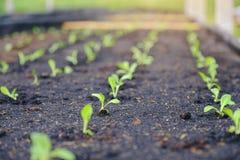 有选择性绿色幼木,小树苗特写镜头在庭院里 免版税库存图片