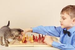 有逗人喜爱的小猫的初学者高段棋手下棋 免版税库存照片