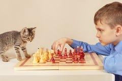 有逗人喜爱的小猫的小高段棋手下棋 免版税图库摄影