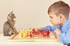 有逗人喜爱的小猫的年轻高段棋手下棋 库存图片