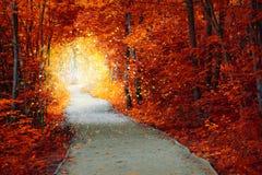 有道路和意想不到的焕发的不可思议的秋天森林 免版税库存图片