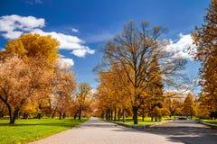 有道路和意想不到的焕发的,童话土地不可思议的秋天公园 免版税库存图片