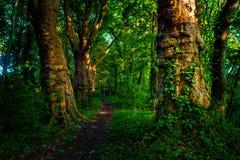 有道路和绿色树的黑暗的喜怒无常的森林, 免版税库存照片