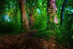 有道路和绿色树的黑暗的喜怒无常的森林, 免版税库存图片