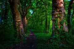 有道路和绿色树的黑暗的喜怒无常的森林, 库存照片