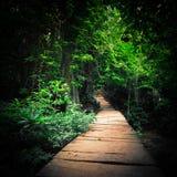 有道路方式的幻想森林通过热带树 免版税库存照片
