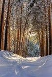 有道路的冬天森林在雪 免版税图库摄影