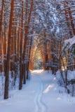 有道路的冬天森林在雪 免版税库存照片