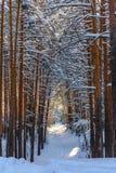 有道路的冬天森林在雪 库存图片