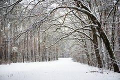 有道路的冬天森林 图库摄影