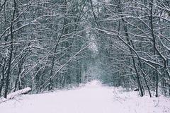 有道路的冬天森林 库存图片