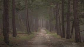 有道路的黑暗的喜怒无常的森林穿过它 早期的黑暗的早晨步行 库存照片
