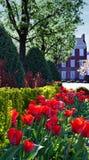 有郁金香庭院的历史的家 库存照片