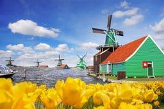 有郁金香的传统荷兰风车在Zaanse Schans,阿姆斯特丹地区,荷兰 免版税图库摄影