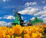 有郁金香的传统荷兰风车在Zaanse Schans,阿姆斯特丹地区,荷兰 图库摄影