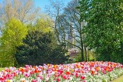 有郁金香的阿尔伯特公园 库存照片