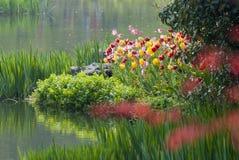 有郁金香花的河在森林里 免版税库存图片