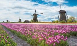 有郁金香领域的风车在荷兰 图库摄影