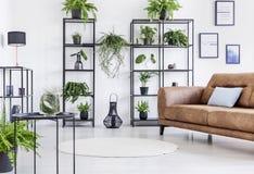 有都市密林的宽敞白色客厅黑金属架子和丝毫棕色皮革长沙发的 免版税库存照片