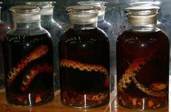 有酒精酊的玻璃瓶子在毒蛇 免版税图库摄影