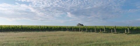 有酿酒厂和结构树的全景 免版税图库摄影