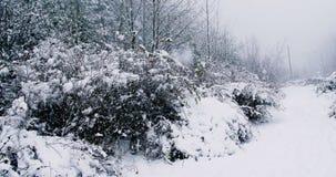 有醉汉的积雪的道路 股票录像