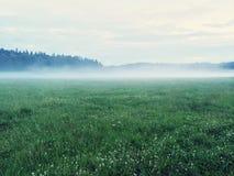 有野生三叶草的梦想的绿色草甸 免版税库存图片