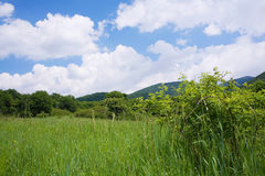 有野花和蓝天的绿色草甸 库存图片