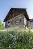 有野花的土气房子在前面 库存照片