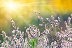 有野花的夏天草甸 库存照片