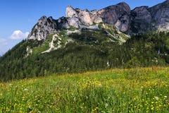 有野花的山高山草甸在Rofan山 奥地利,新手 图库摄影
